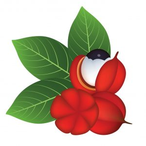 "Guarana's stimulating effects mirror its ""eye-popping"" appearance... but it's got nothing to do with testosterone."