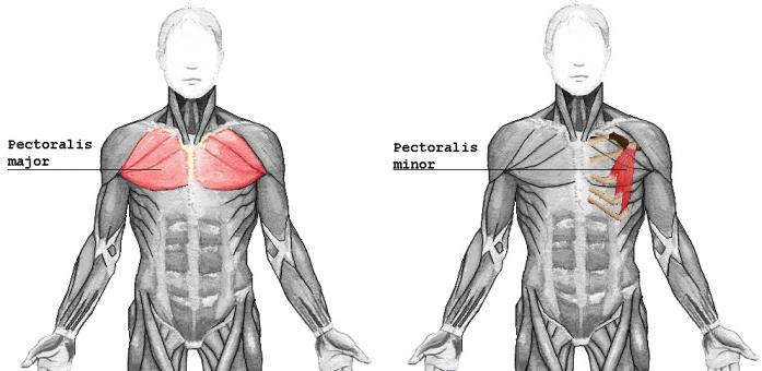how to turn my chest fat into muscle